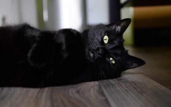 Gato Preto se tornou símbolo da sexta-feira 13