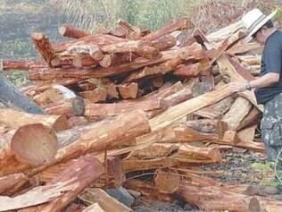 Entre agosto e dezembro de 2007, foram desmatados 3.235 km2 de floresta, segundo o Inp