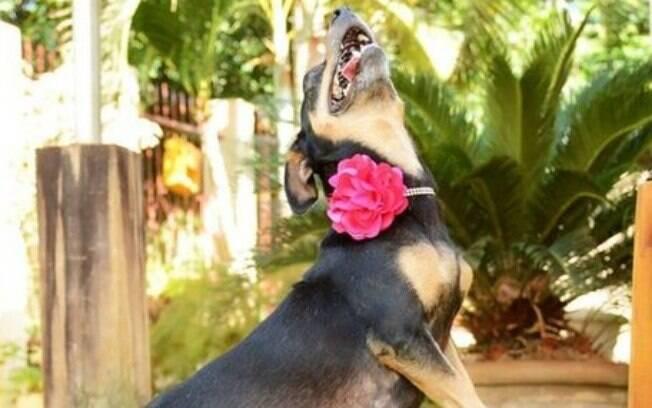 Pós-parto de uma cadela: saiba todos os passos importantes