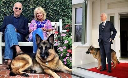 Morre Champ, o cachorro de Joe Biden, aos 13 anos
