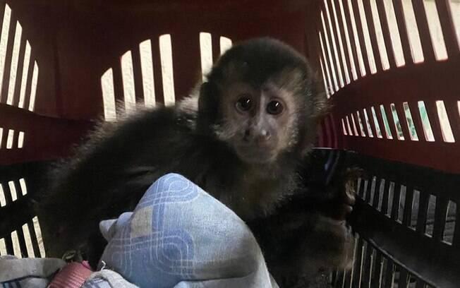 Homem foi preso enquanto tentava negociar macaco-prego.
