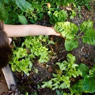 Quando for plantar, pressione em volta  da muda para retirar os bolsões de ar