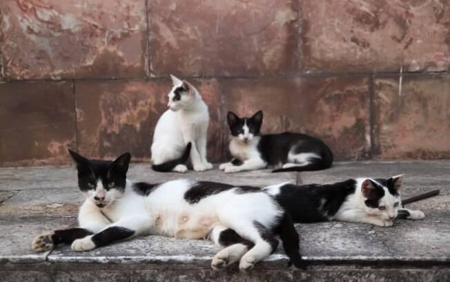 Muitos gatos morreram envenenados em Joinville