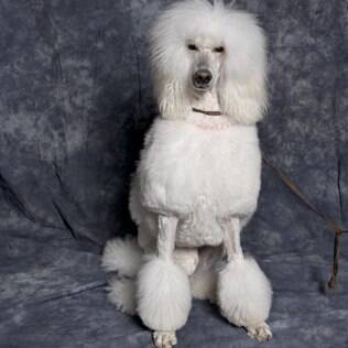 Poodle - undefined