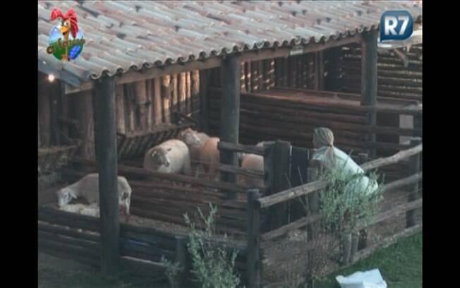 Extasiada, a peoa observa as ovelhinhas