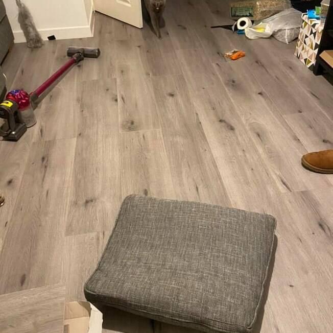 Sala de estar que gato destruiu