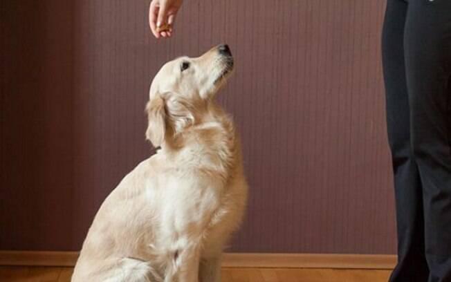 O comando para cachorro é muito importante