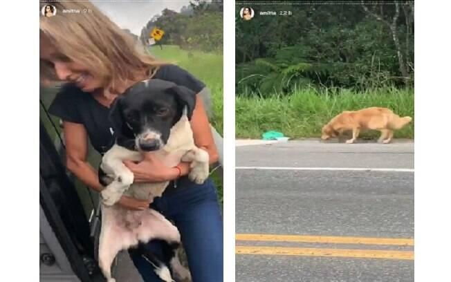 Os cachorros foram abandonados na beira de uma estrada em São Paulo