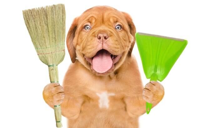 É possível utilizar produtos domésticos na hora da higiene no pet
