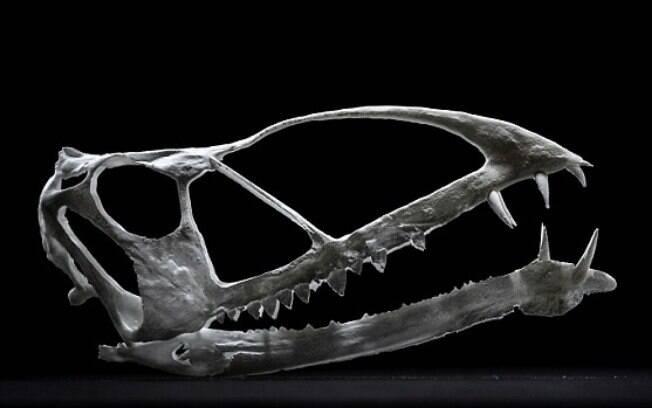 Pterodáctilo provavelmente morreu afogado e tinha uma papada igual à de um pelicano, que armazenava presas afiadas