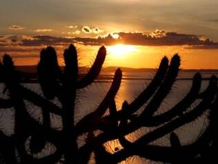 Marcado pelo pálido verde dos cactos, o árido sertão ganha cores vivas ao por do sol