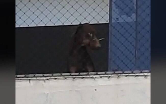 GM resgata cães em situação de maus-tratos em Americana