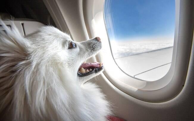 Para viajar de avião com o pet é preciso seguir vários passos