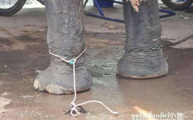 Nam, enquanto era forçada a trabalhar como elefante que transporta  turista