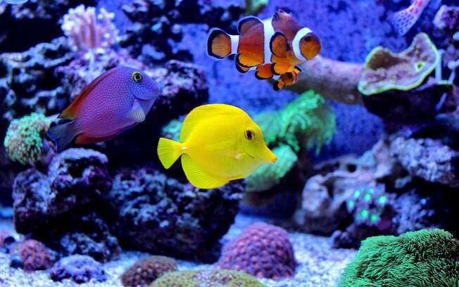 Confira quais as utilidades, formatos e apetrechos e faça o melhor aquário para seu peixinho