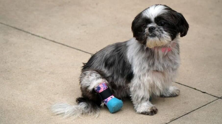 Chloe foi vitima de maus-tratos e precisou ter duas patas parcialmente amputadas