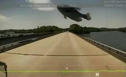 """""""Peixe voador"""" cai em para-brisa de caminhão"""