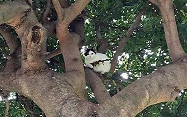 """Polícia é chamada para tirar """"gato armado com rifle"""" de cima da árvore"""