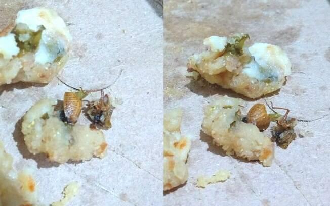 Marido da cliente tirou fotos da esfirra com o inseto para conseguir algum retorno do estabelecimento da Zona Sul