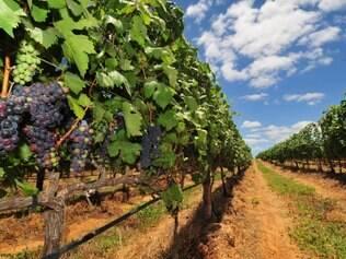A introdução de uva irrigada no Vale do São Francisco, que resulta na produção de vinhos finos, também vem alimentando o enoturismo na região