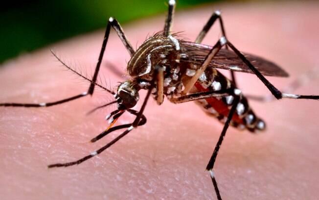 Problema continua a preocupar as autoridades porque há mais de 17 mil mulheres grávidas diagnosticadas com o zika