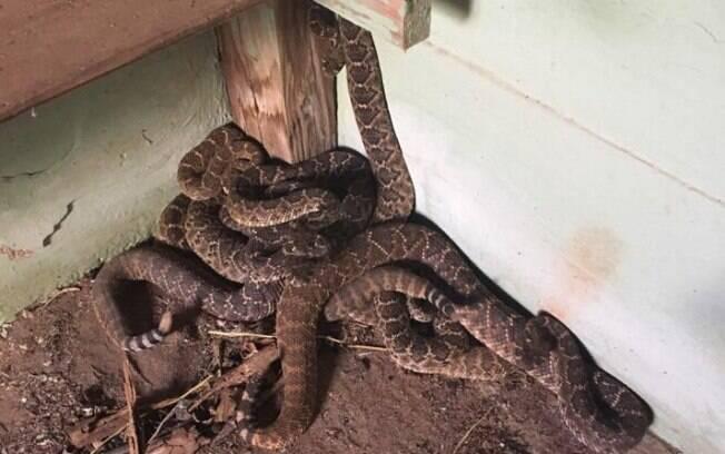 O especialista em cobras encontrou mais cascavéis no abrigo de tempestade e na fundação da casa, totalizando 24