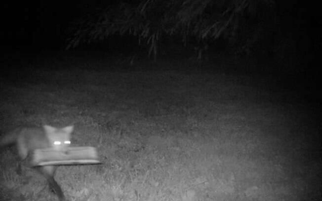 Com câmeras noturnas James descobriu que eram raposas que estavam lhe entregando os jornais