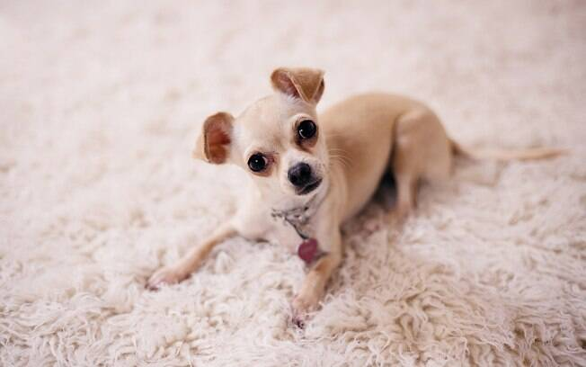 Mulher recusa recompensa ao devolver cachorro para família