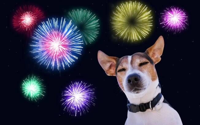Os fogos de artifício deixam os animais de estimação muito estressados