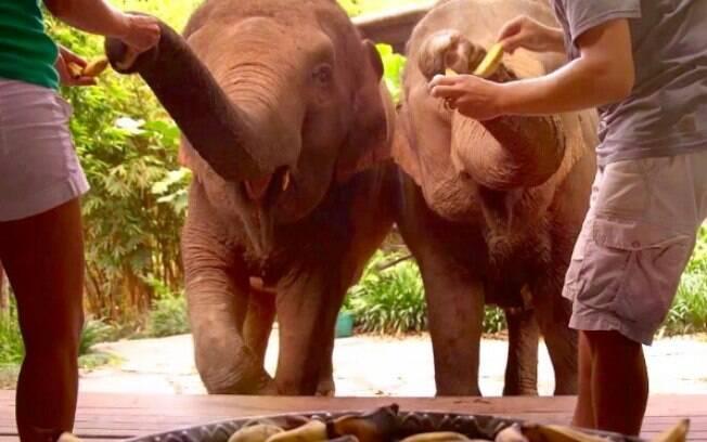 Era comum turistas alimentarem elefantes em locais na Tailândia