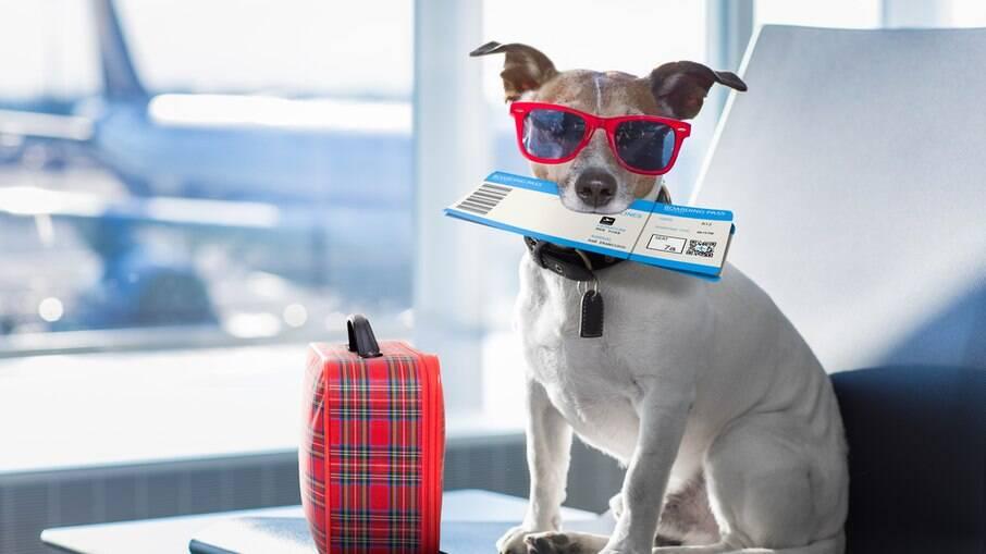 Os pets geralmente ficam estressados com uma viagem de avião, mas na cabine é mais tranquilo
