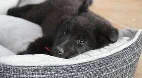 Quer uma boa cama para seu pet? Idade e raça são fatores decisivos
