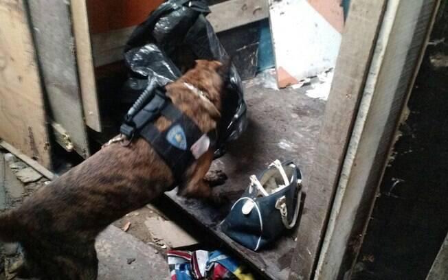Durante a ação o pastor-holandês encontrou a droga dentro de uma sacola escondida em um barraco