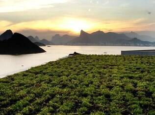 Plantas resistentes e de baixa estatura são as mais indicadas para cobrir um telhado