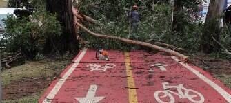 Prefeitura de SP reduz serviço de poda e remoção de árvores; queixas só aumentam