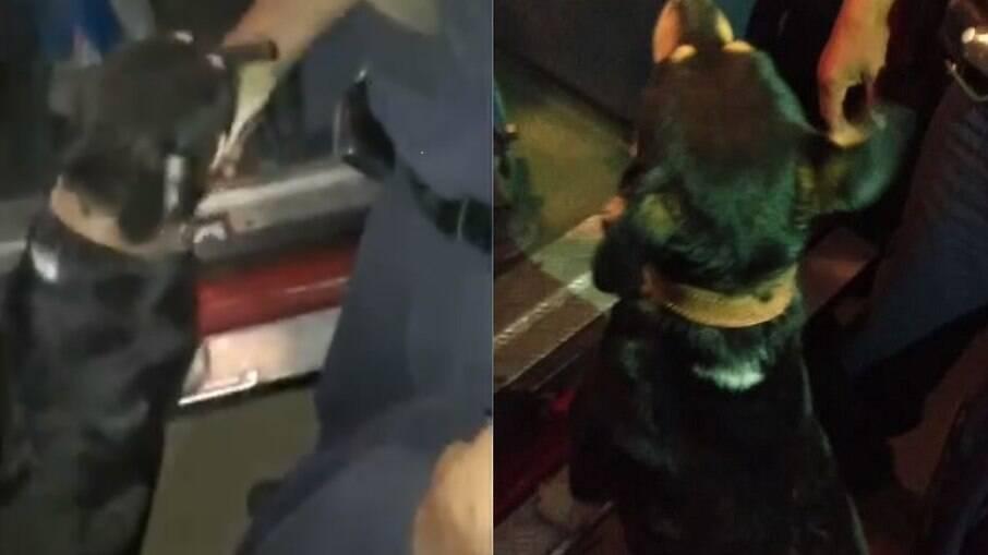 Milu, o cachorro ao lado da ambulância em que o garoto recebia os primeiros atendimentos
