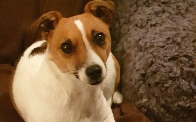 A cadelinha Mitzi ficou desaparecida por três dias