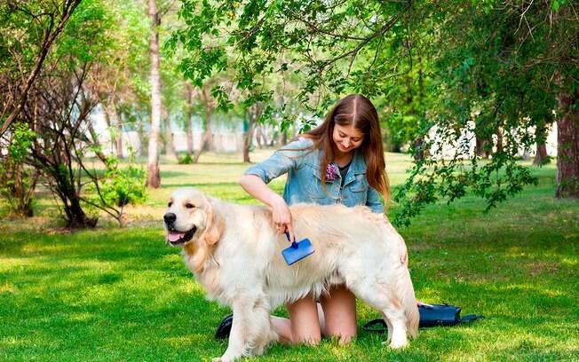 Pentear o cachorro com certa frequência evita que ele desenvolva problemas de pele.