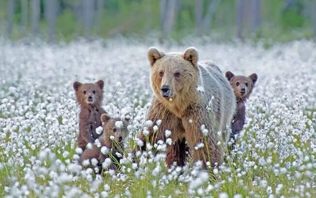 Passeando com os filhotes entre as flores