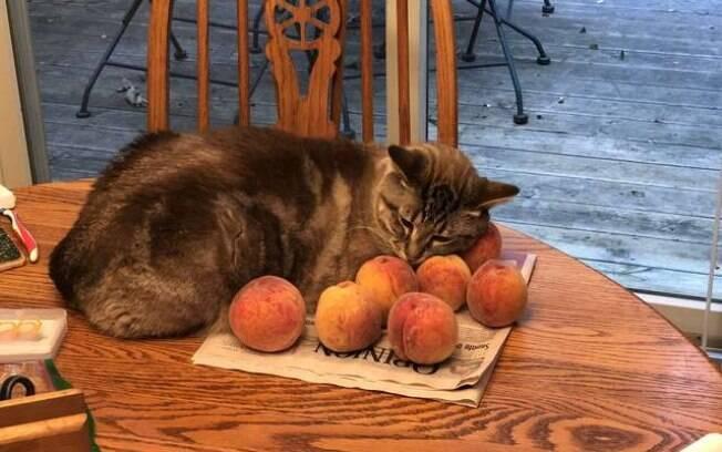 Gato que é apaixonado por pêssegos faz sucesso nas redes sociais