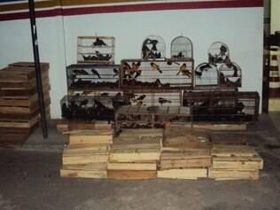 Os 916 pássaros eram transportados em caixas de madeira.