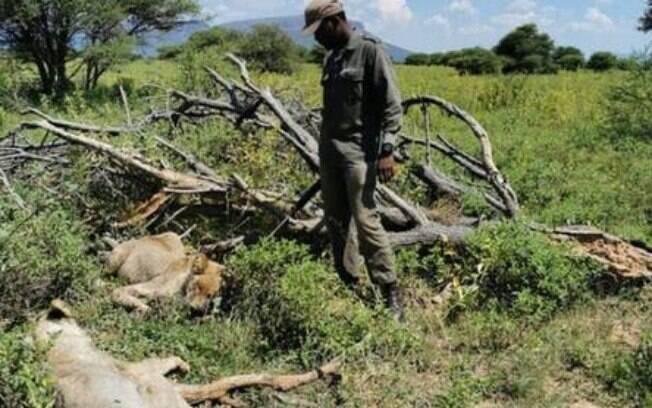 Dois animais foram sacrificados após a morte do guia