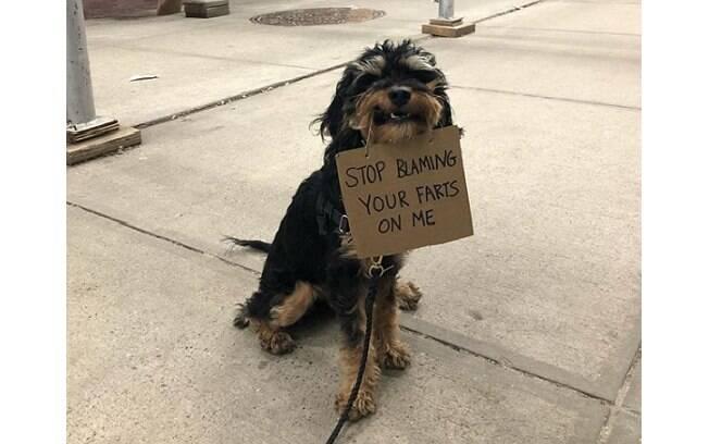 cachorro segurando plaquinha