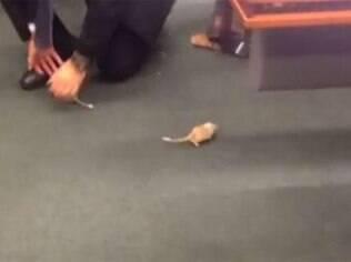 Deputado Marco Feliciano publicou a imagem de um dos ratos que foram soltos durante sessão da CPI da Petrobras