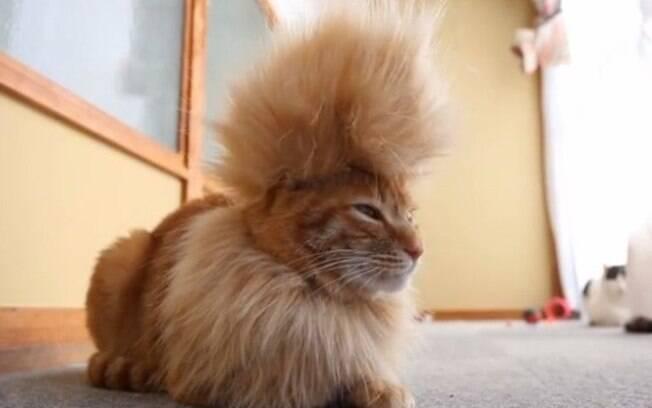 Pets protagonizam fotos engraçadas com seus penteados bem bizarros