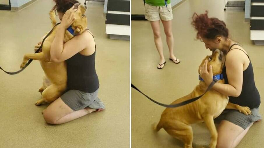 Mulher reencontra cachorro perdido há dois anos em abrigo