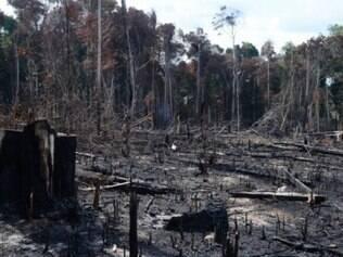 Conforme números do Inpe, a área afetada pelo desmatamento já atingiu 2.215,5 quilômetros quadrados