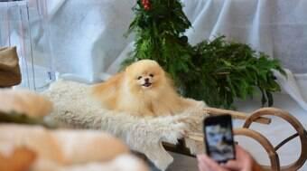 Confira as 10 raças de cães que são mais populares no TikTok