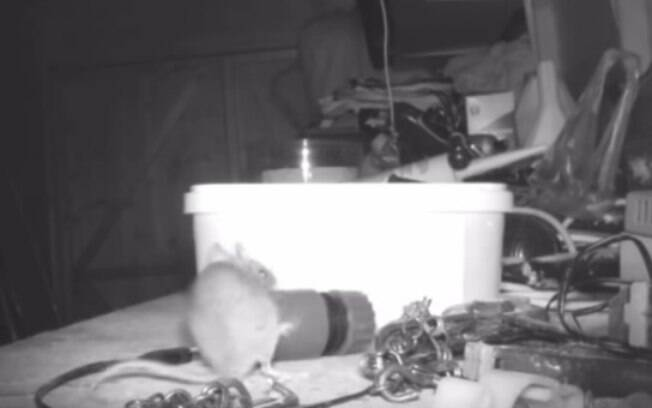 O ratinho foi flagrado movendo os objetos na oficina