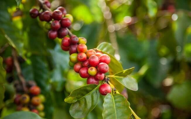 Café deixa de ser apenas commodity ao conquistar mercado pelos sabores